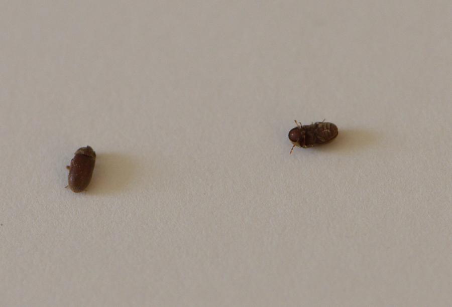 Au secour c 39 est l 39 invasion qui sont ces insectes - Insecte volant dans la maison ...